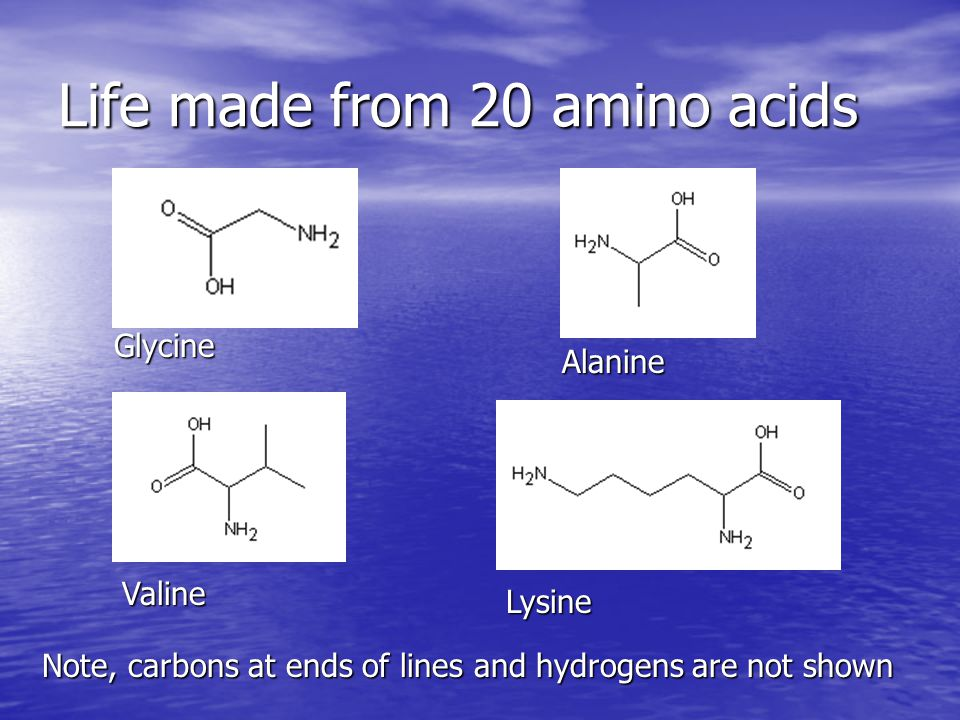 Life made from 20 amino acids Glycine Alanine Valine Lysine Note, carbons at ends of lines and hydrogens are not shown