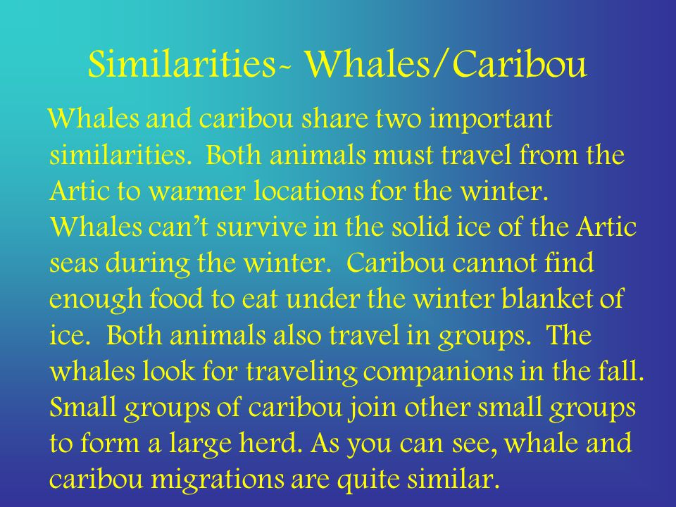 Similarities- Whales/Caribou Whales and caribou share two important similarities.
