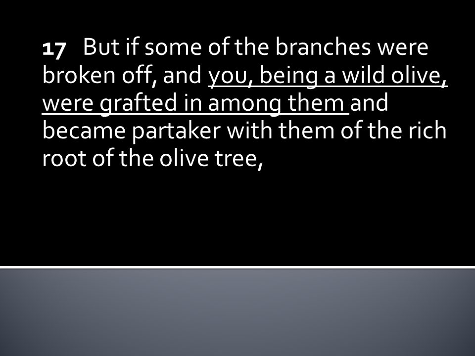 17 But if some of the branches were broken off, and you, being a wild olive, were grafted in among them and became partaker with them of the rich root of the olive tree,
