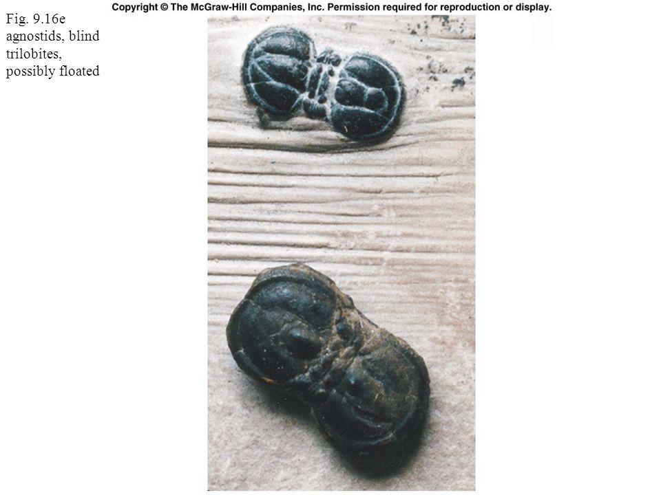 Fig. 9.16e agnostids, blind trilobites, possibly floated