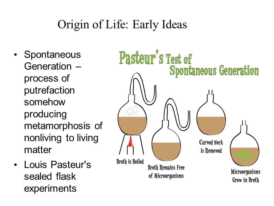 Origin of Life: Early Ideas Spontaneous Generation – process of putrefaction somehow producing metamorphosis of nonliving to living matter Louis Pasteur s sealed flask experiments