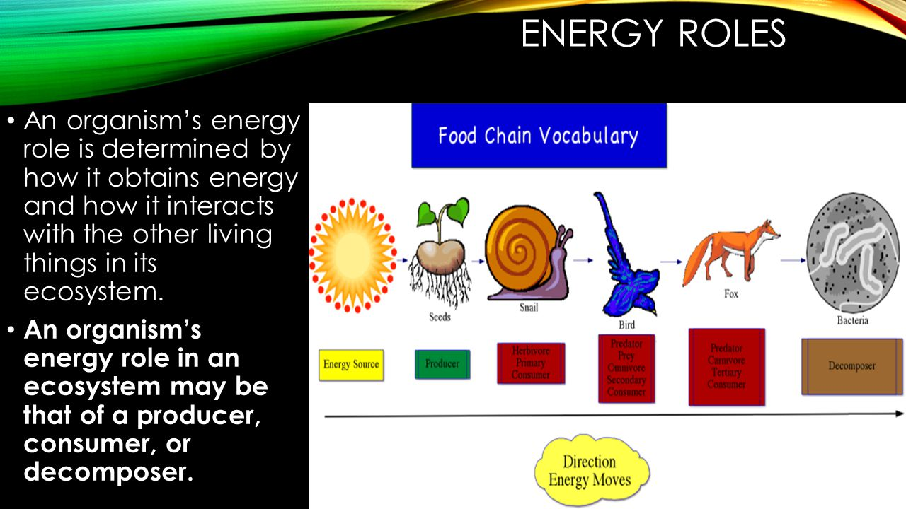 ENERGY ROLES An organism's energy role is determined by how it obtains energy and how it interacts with the other living things in its ecosystem.