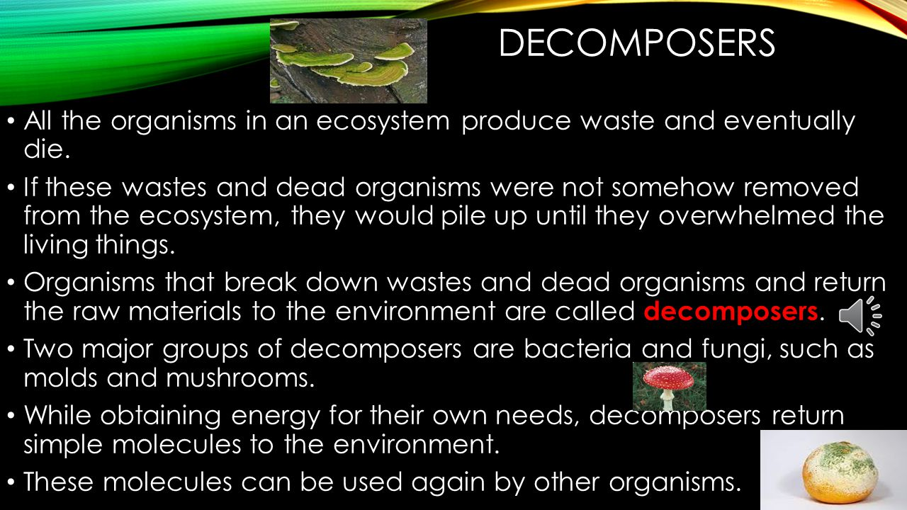 DECOMPOSERS All the organisms in an ecosystem produce waste and eventually die.