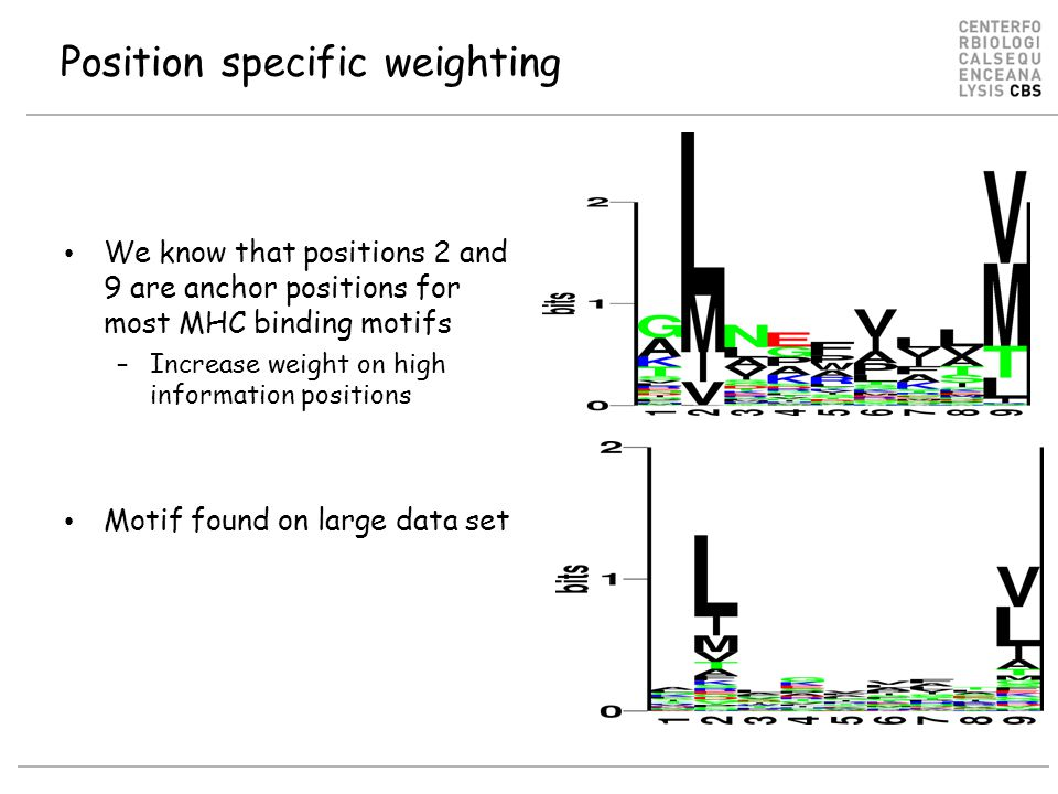 Position specific weighting We know that positions 2 and 9 are anchor positions for most MHC binding motifs –Increase weight on high information positions Motif found on large data set