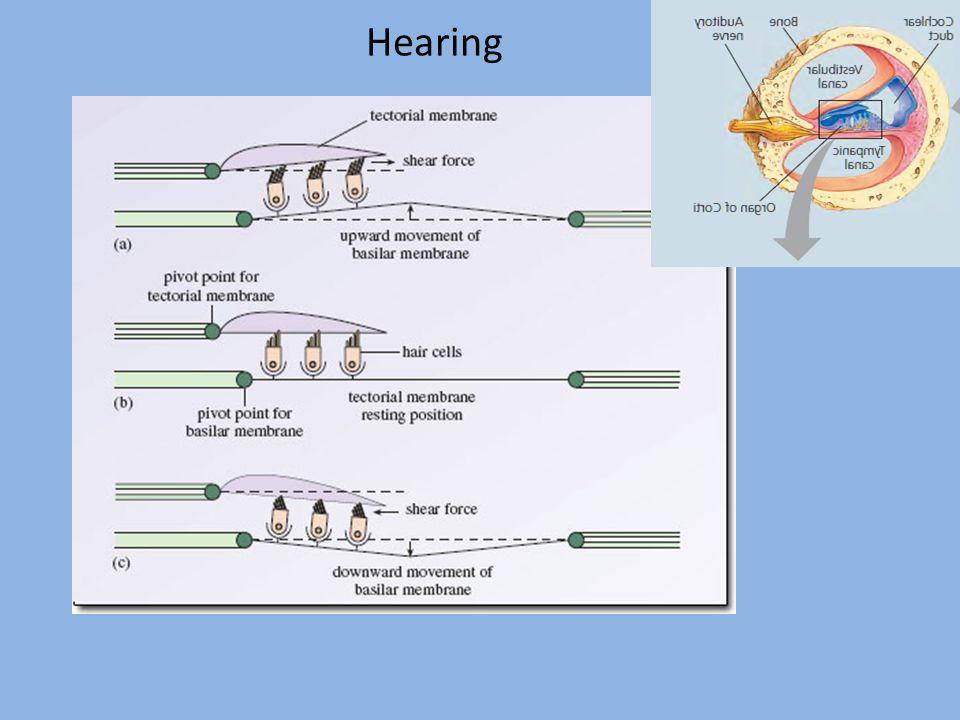Hearing