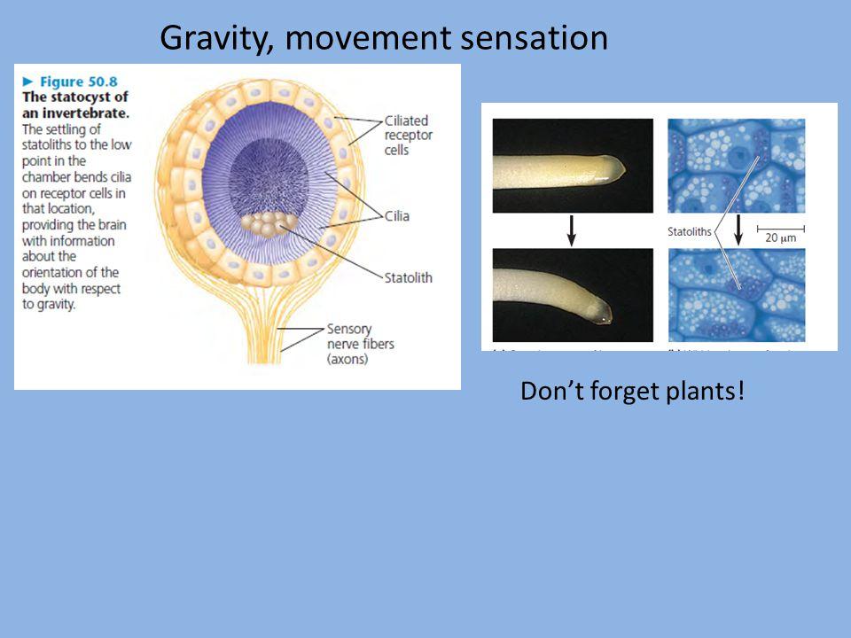 Gravity, movement sensation Don't forget plants!