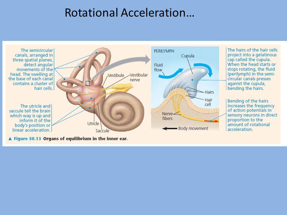 Rotational Acceleration…