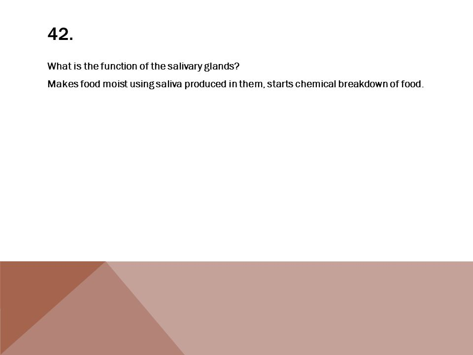 42. What is the function of the salivary glands.