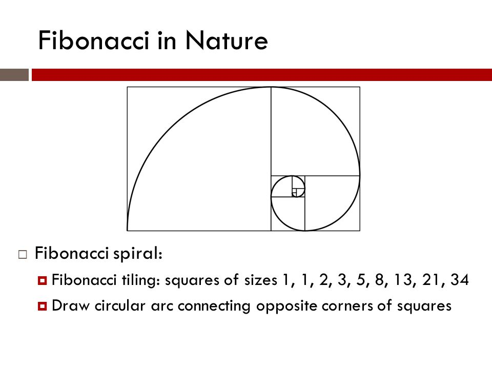 Fibonacci in Nature  Fibonacci spiral:  Fibonacci tiling: squares of sizes 1, 1, 2, 3, 5, 8, 13, 21, 34  Draw circular arc connecting opposite corners of squares