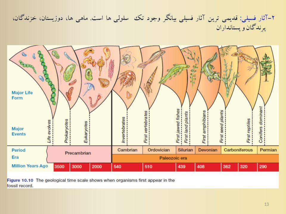 13 2 - آثار فسیلی : قدیمی ترین آثار فسیلي بیانگر وجود تک سلولی ها است.