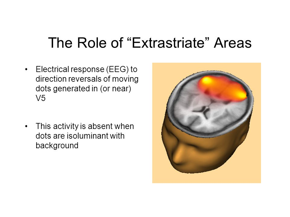 Electrical response (EEG) to direction reversals of moving dots generated in (or near) V5 This activity is absent when dots are isoluminant with background The Role of Extrastriate Areas
