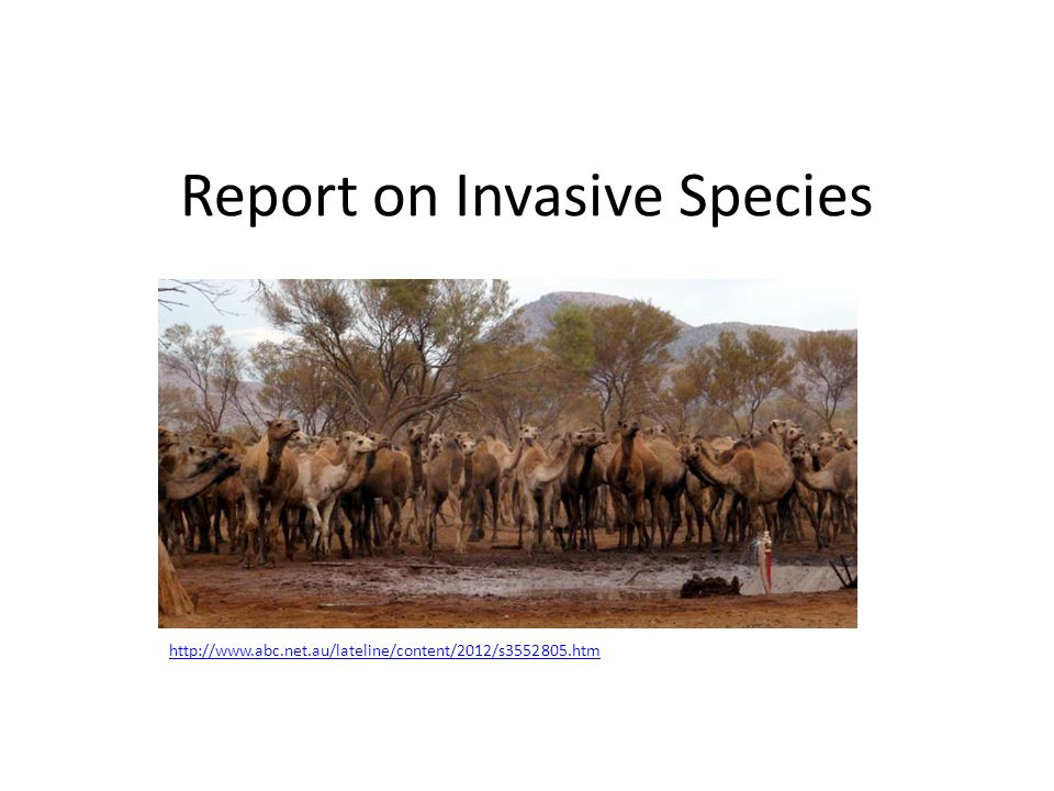 Report on Invasive Species http://www.abc.net.au/lateline/content/2012/s3552805.htm