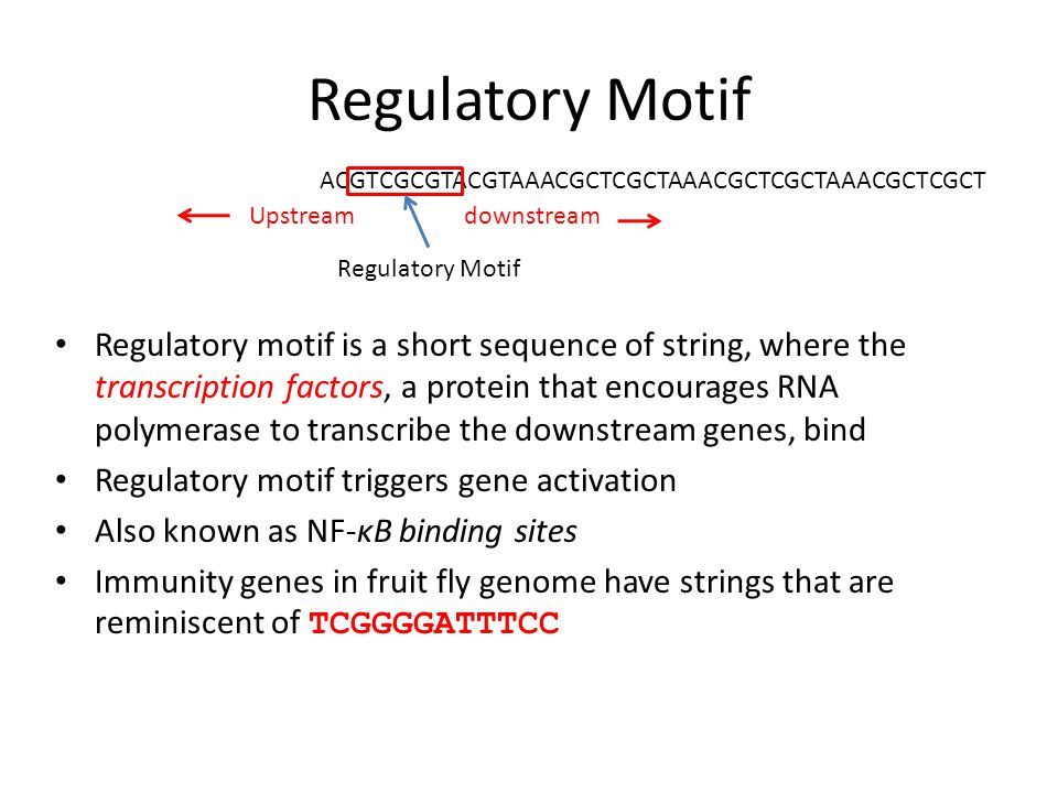 Regulatory Motif Regulatory motif is a short sequence of string, where the transcription factors, a protein that encourages RNA polymerase to transcribe the downstream genes, bind Regulatory motif triggers gene activation Also known as NF-κB binding sites Immunity genes in fruit fly genome have strings that are reminiscent of TCGGGGATTTCC ACGTCGCGTACGTAAACGCTCGCTAAACGCTCGCTAAACGCTCGCT Regulatory Motif Upstream downstream