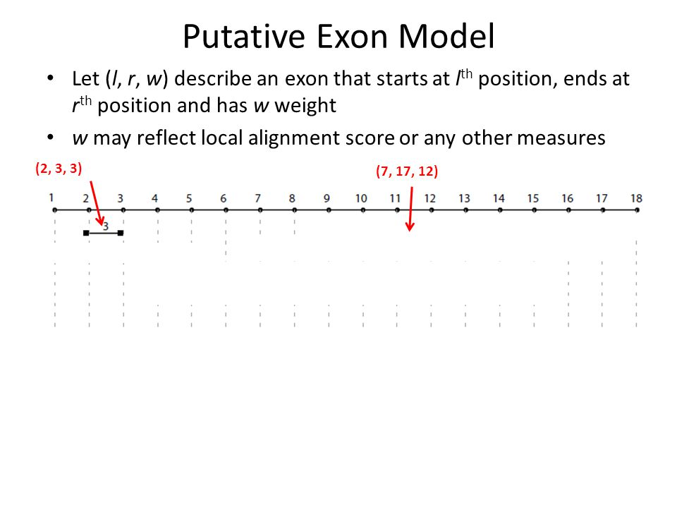 Putative Exon Model Let (l, r, w) describe an exon that starts at l th position, ends at r th position and has w weight w may reflect local alignment score or any other measures (2, 3, 3) (7, 17, 12)