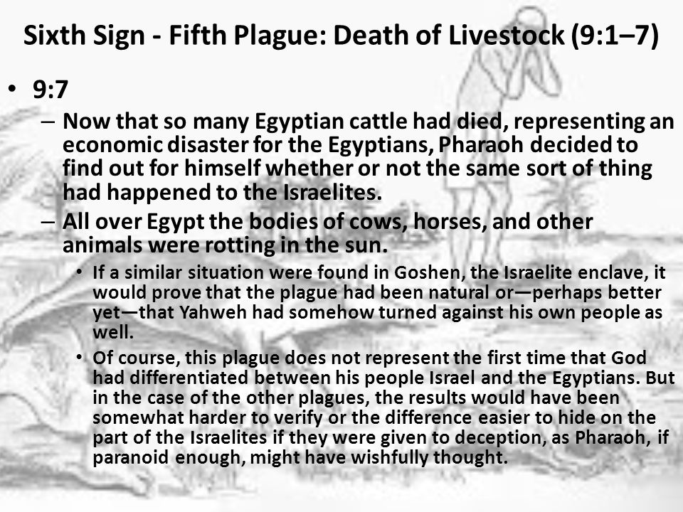 Sixth Sign - Fifth Plague: Death of Livestock (9:1–7) 9:7 – Now that so many Egyptian cattle had died, representing an economic disaster for the Egyptians, Pharaoh decided to find out for himself whether or not the same sort of thing had happened to the Israelites.