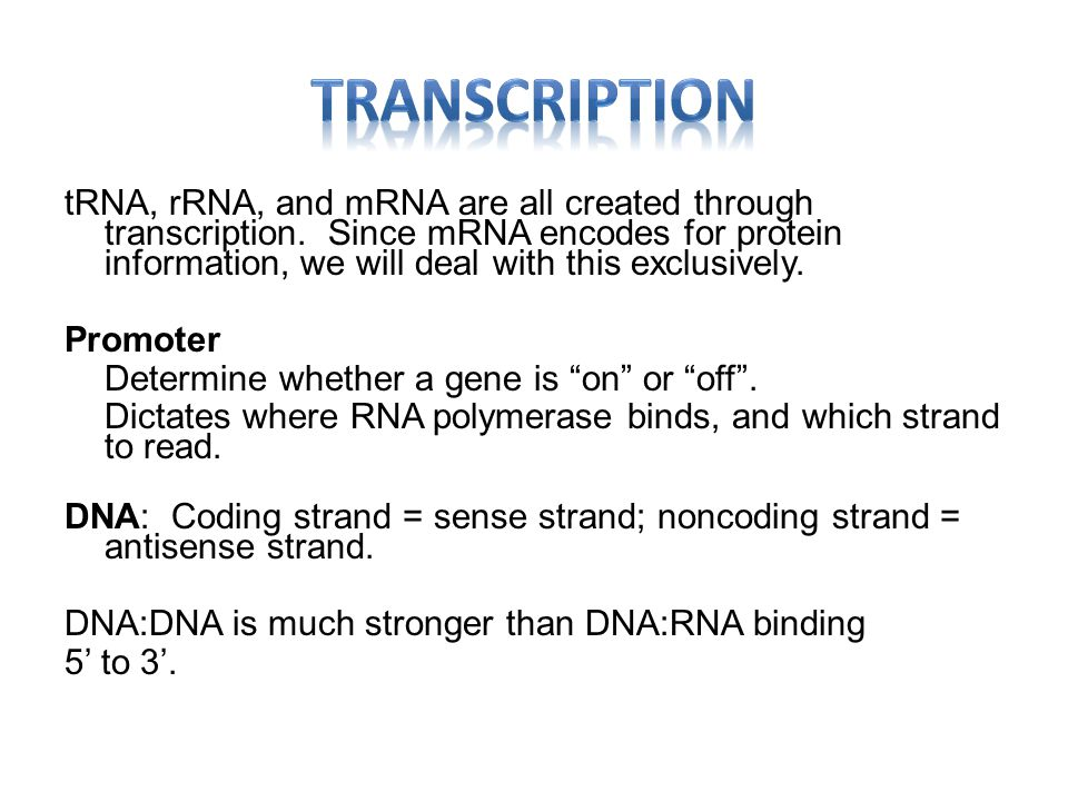 tRNA, rRNA, and mRNA are all created through transcription.