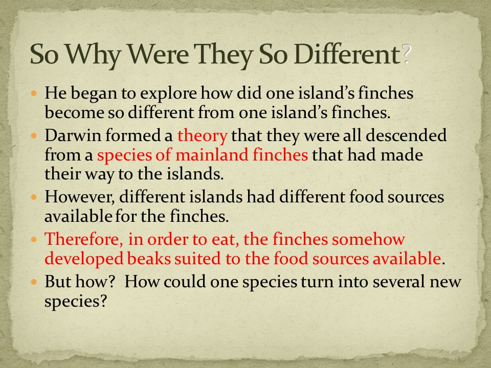 He began to explore how did one island's finches become so different from one island's finches.