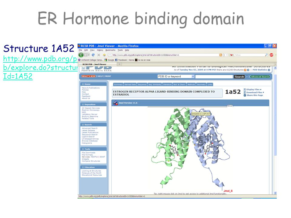 Estrogen Receptor Hormone binding domain Estradiol binds in a deep cleft of a binding site in this mostly helical 240 residue domain of ER.