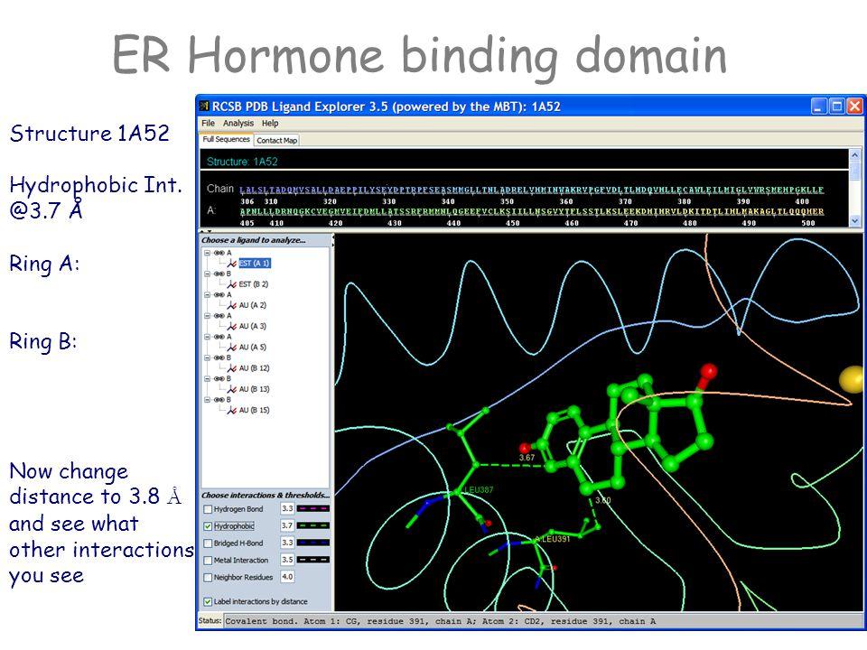 ER Hormone binding domain Structure 1A52 Hydrogen Bonds Ring A: Oxygen ______________________ Ring D Oxygen ___________