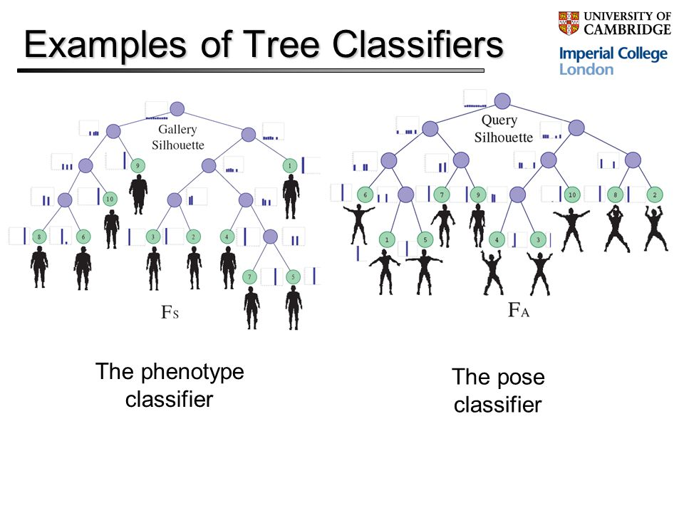 Examples of Tree Classifiers The phenotype classifier The pose classifier