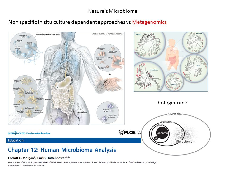 Nature's Microbiome hologenome Non specific in situ culture dependent approaches vs Metagenomics