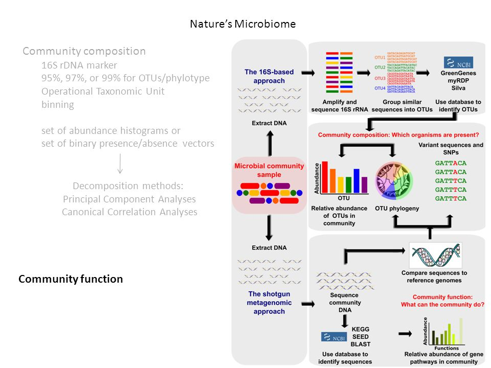 Nature's Microbiome Community function Community composition 16S rDNA marker 95%, 97%, or 99% for OTUs/phylotype Operational Taxonomic Unit binning set of abundance histograms or set of binary presence/absence vectors Decomposition methods: Principal Component Analyses Canonical Correlation Analyses