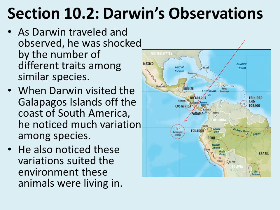 Section 10.2: Darwin's Observations As Darwin traveled and observed, he was shocked by the number of different traits among similar species. When Darw