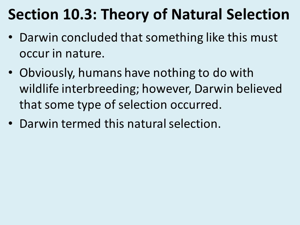 Section 10.3: Theory of Natural Selection Darwin concluded that something like this must occur in nature. Obviously, humans have nothing to do with wi