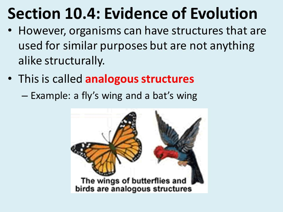 Section 10.4: Evidence of Evolution However, organisms can have structures that are used for similar purposes but are not anything alike structurally.