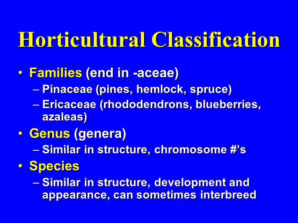 Horticultural Classification Families (end in -aceae)Families (end in -aceae) –Pinaceae (pines, hemlock, spruce) –Ericaceae (rhododendrons, blueberries, azaleas) Genus (genera)Genus (genera) –Similar in structure, chromosome #'s SpeciesSpecies –Similar in structure, development and appearance, can sometimes interbreed