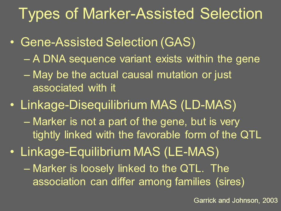Frequency of the Marker ph2h2 h2Mh2M 0.50 0.125 0.750.480.100 0.900.460.050 For GeneStar Marbling with p = 0.50, h 2 M ~ 0.04, which accounts for 11% of the additive variance in marbling score.