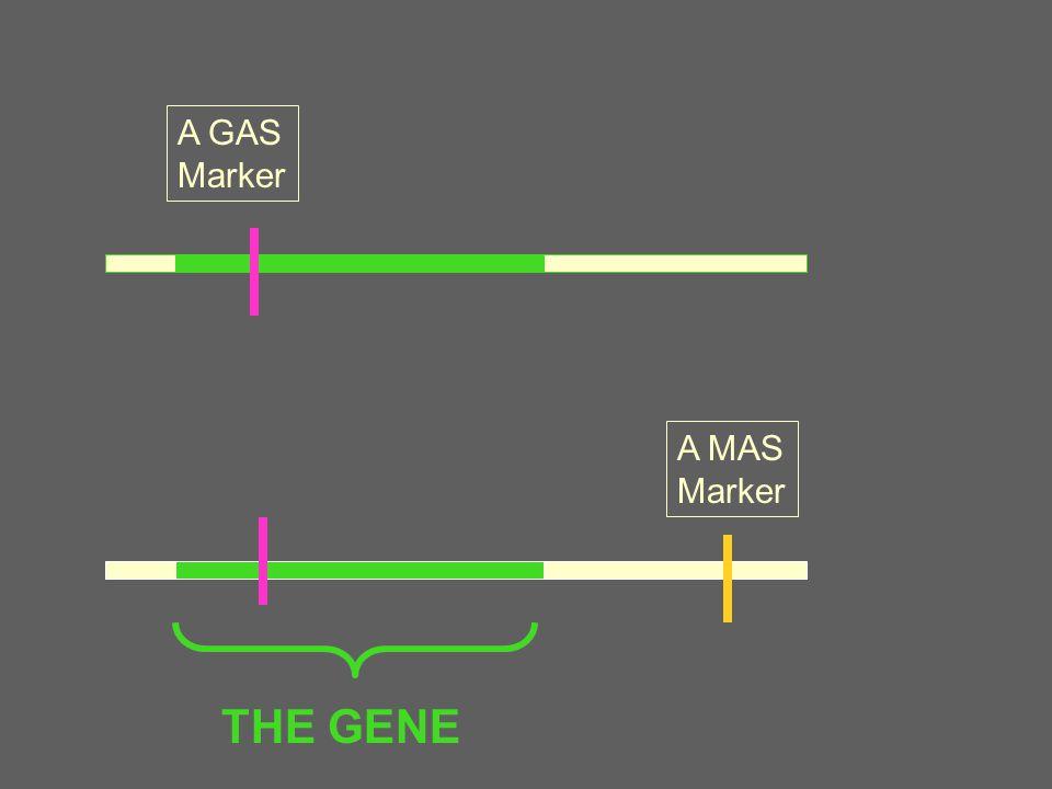 A GAS Marker A MAS Marker LD → LE THE GENE