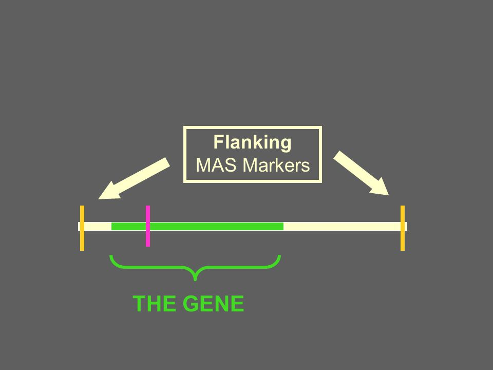 Judging the Importance of a Marker The Size of Marker Effect –How different are the different marker genotypes.
