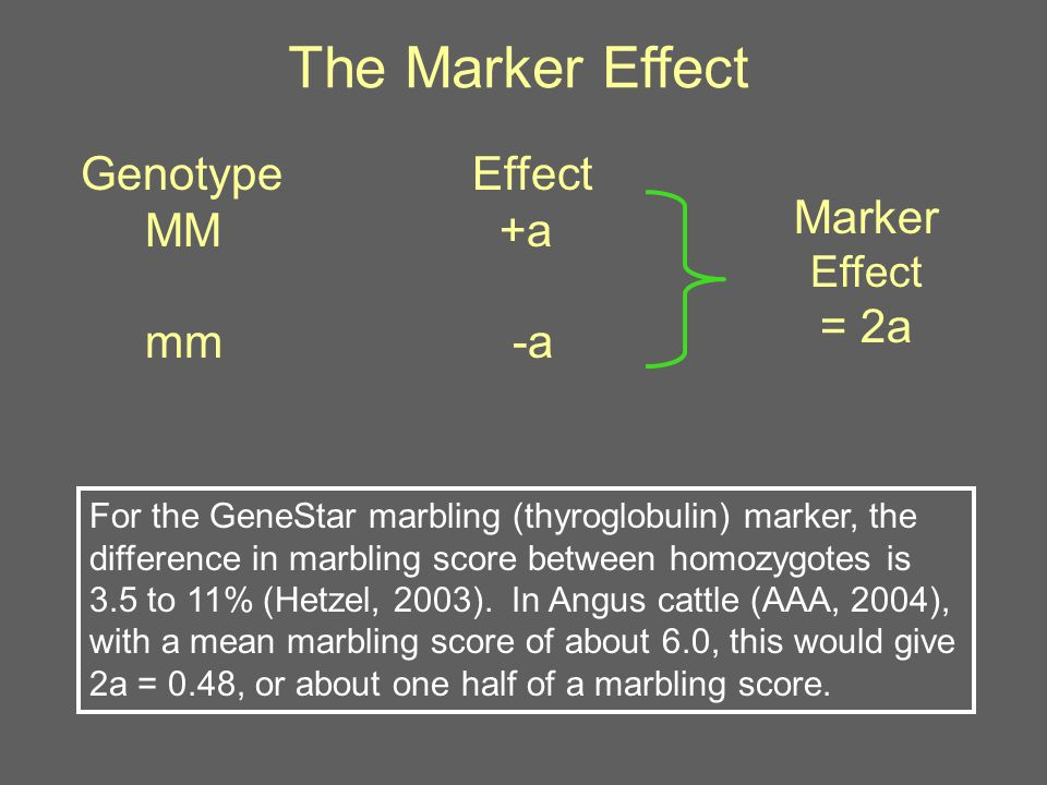 The Marker Effect Genotype Effect MM+a mm -a Marker Effect = 2a For the GeneStar marbling (thyroglobulin) marker, the difference in marbling score between homozygotes is 3.5 to 11% (Hetzel, 2003).