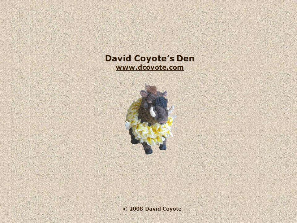 © 2008 David Coyote