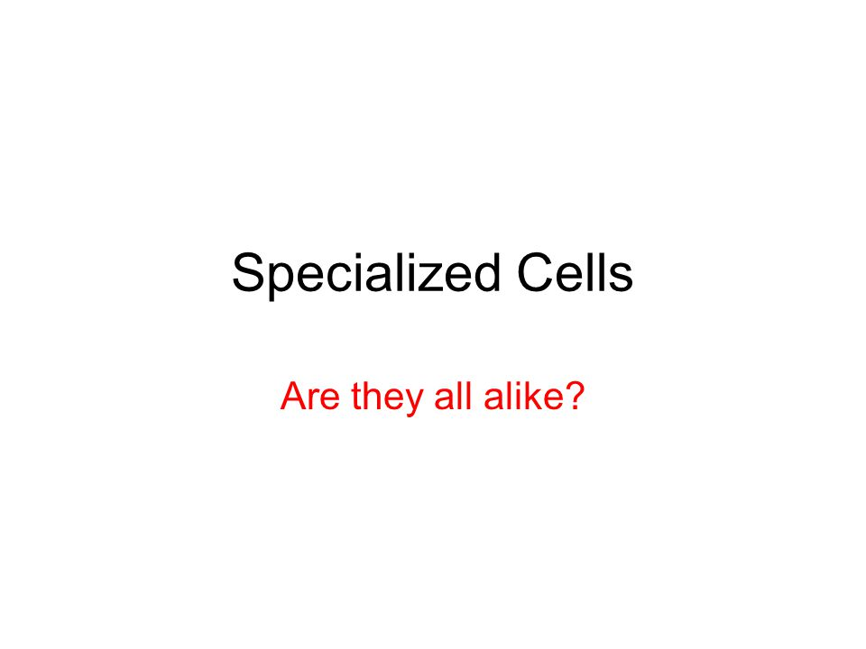 Specialized Cells Are they all alike