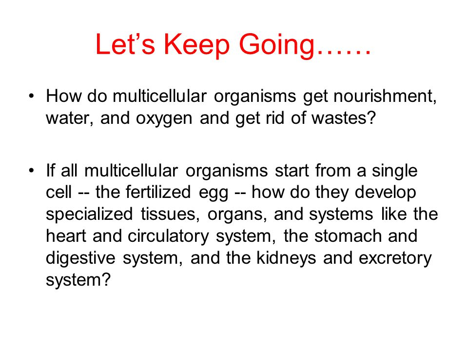 Let's Keep Going…… How do multicellular organisms get nourishment, water, and oxygen and get rid of wastes.