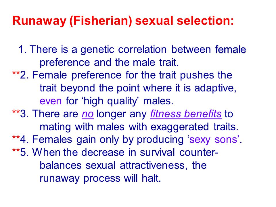 Runaway (Fisherian) sexual selection: female 1. There is a genetic correlation between female preference and the male trait. **2. Female preference fo