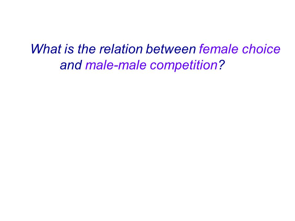 What is the relation between female choice and male-male competition?