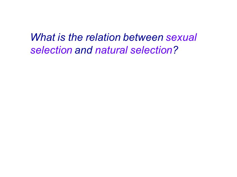 What is the relation between sexual selection and natural selection?
