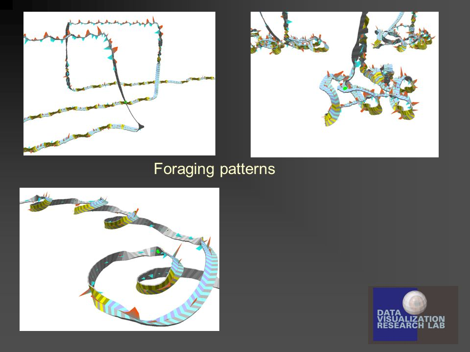 Foraging patterns