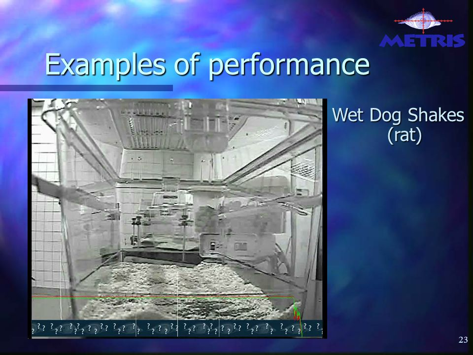 23 Examples of performance Wet Dog Shakes (rat)