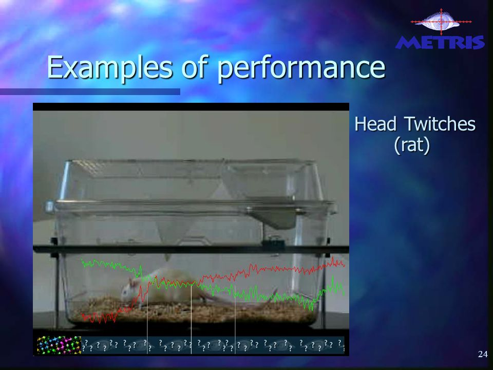 24 Examples of performance Head Twitches (rat)