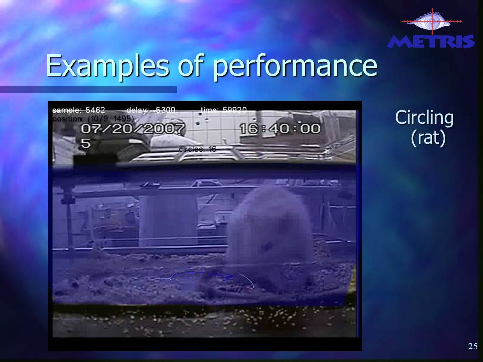25 Examples of performance Circling (rat)