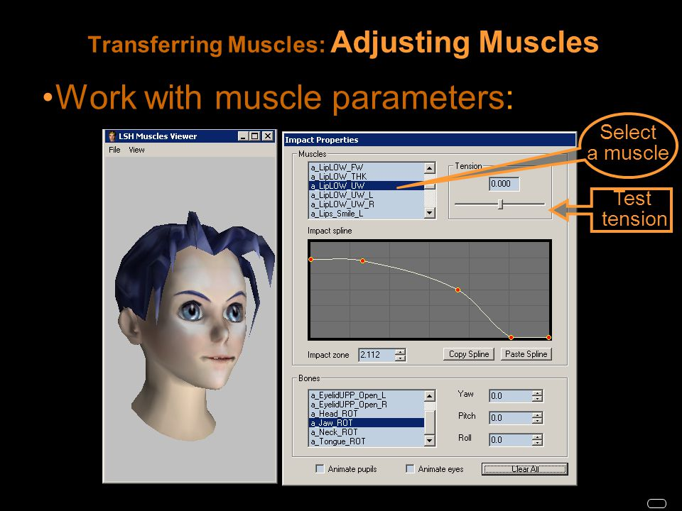 Transferring Muscles: Adjusting Muscles Work with muscle parameters: Test tension Select a muscle