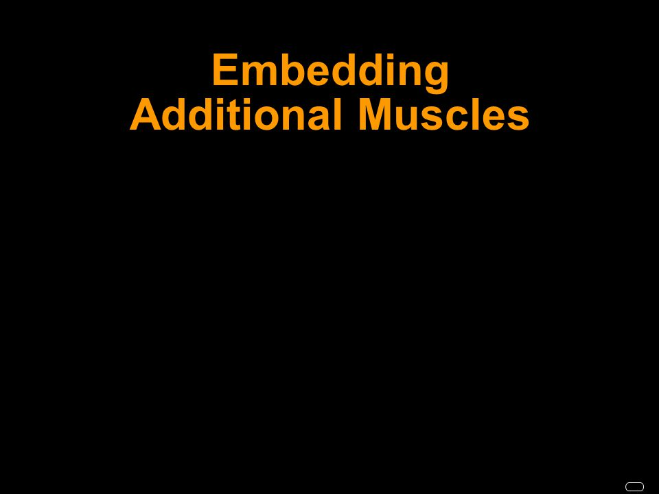 Embedding Additional Muscles