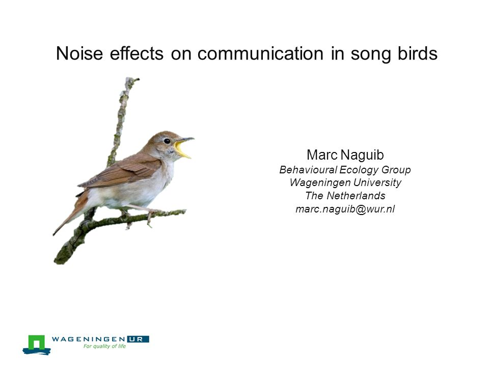 Noise effects on communication in song birds Marc Naguib Behavioural Ecology Group Wageningen University The Netherlands marc.naguib@wur.nl