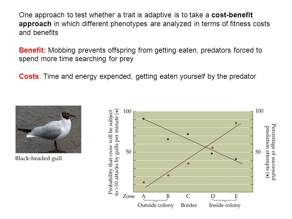 One approach to test whether a trait is adaptive is to take a cost-benefit approach in which different phenotypes are analyzed in terms of fitness costs and benefits Benefit: Mobbing prevents offspring from getting eaten, predators forced to spend more time searching for prey Costs: Time and energy expended, getting eaten yourself by the predator
