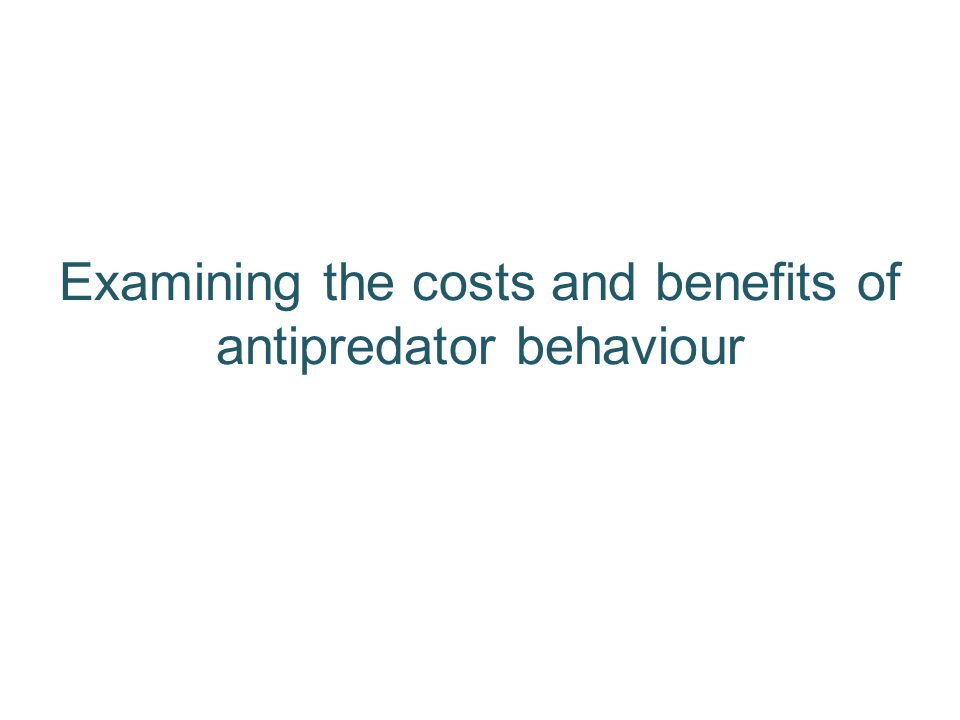 Examining the costs and benefits of antipredator behaviour