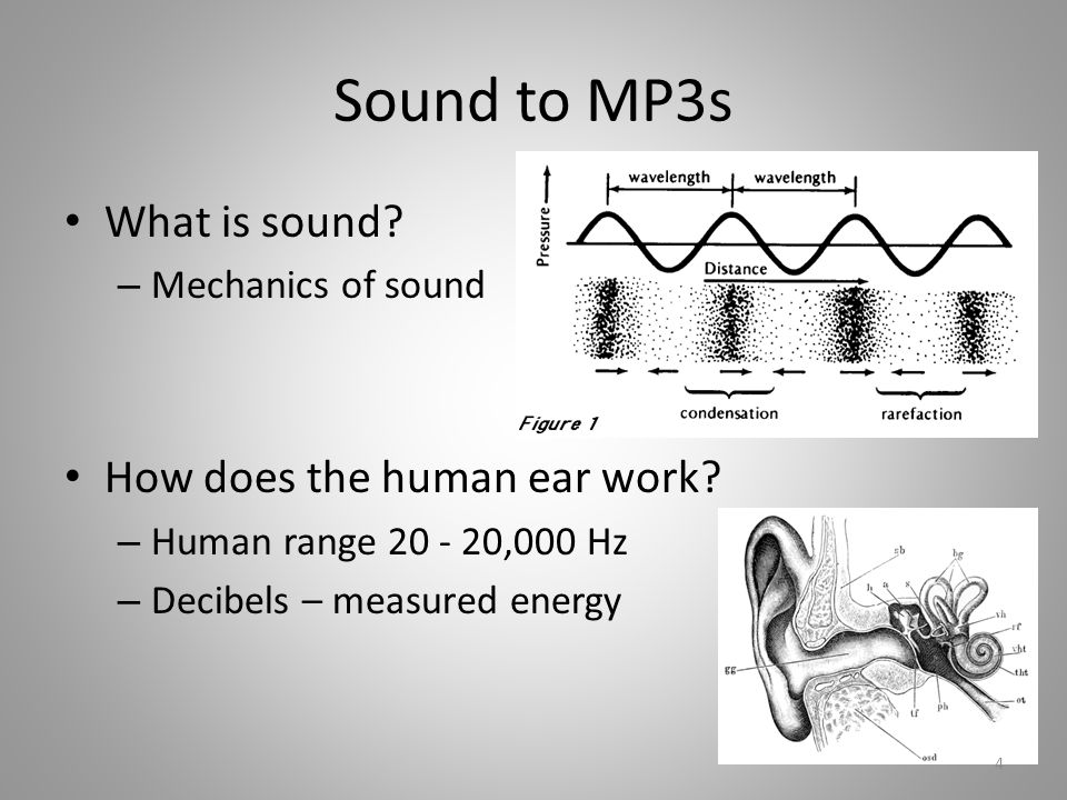 Sound to MP3s What is sound. – Mechanics of sound How does the human ear work.